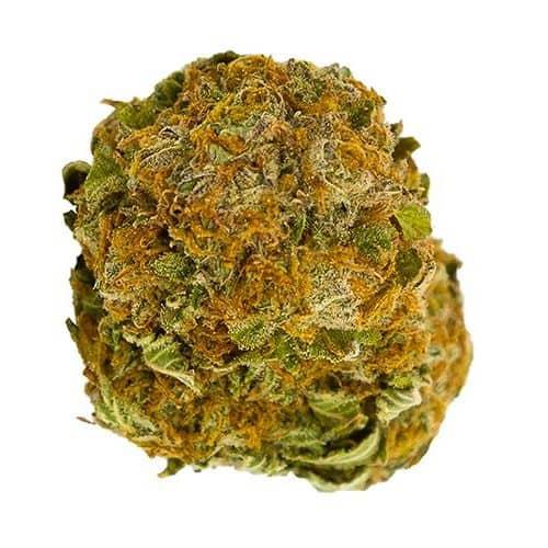 Indica-Dominant SENSI STAR by Namaste THC 11-20% CBD 0-1%