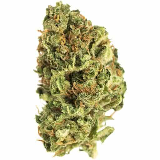 Sativa SWEET JERSEY 3 (JEAN GUY) by Riff THC 14-24% CBD 0-0.99%