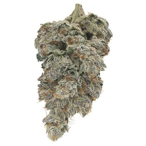 Indica-Dominant QUADRA (HEADSTASH) by Broken Coast Cannabis THC 14-24% CBD 0.00-1.99%