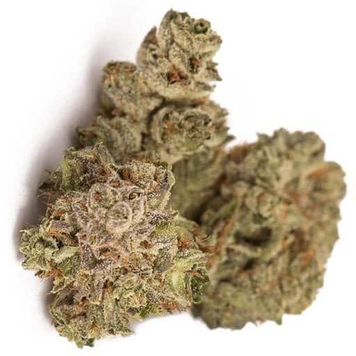 Indica-Dominant MANGO by Canaca THC 16-24% CBD 0-1%
