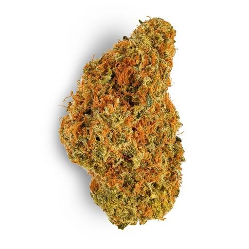 Sativa-Dominant CHOCOLOPE by Aurora THC 14-24% CBD 0-1%