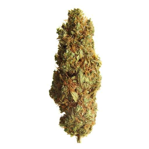 Sativa-Dominant BC ORGANIC CREEK CONGO by Simply Bare THC 16-20% CBD 0-0.03%