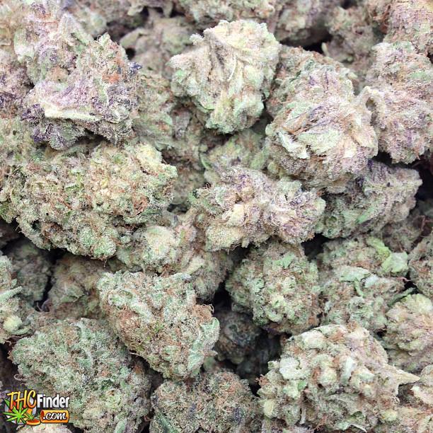 619purplealien purple alien medical marijuana buds from greeworkssd thcfinder