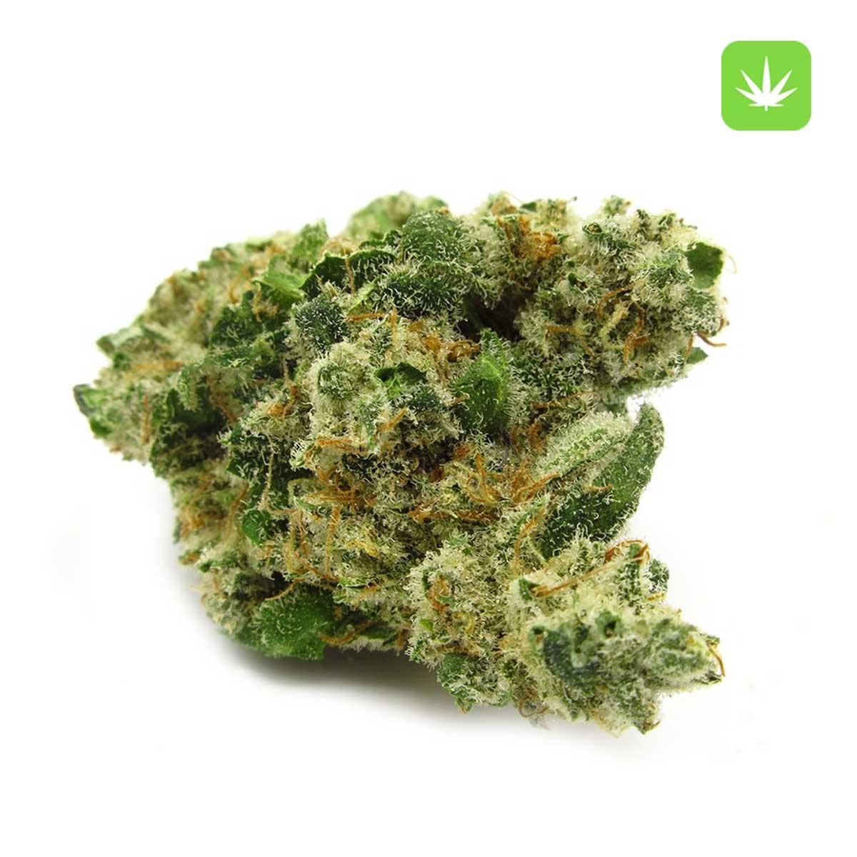 Afghan Kush 1 Cannabis Avenue 1 4