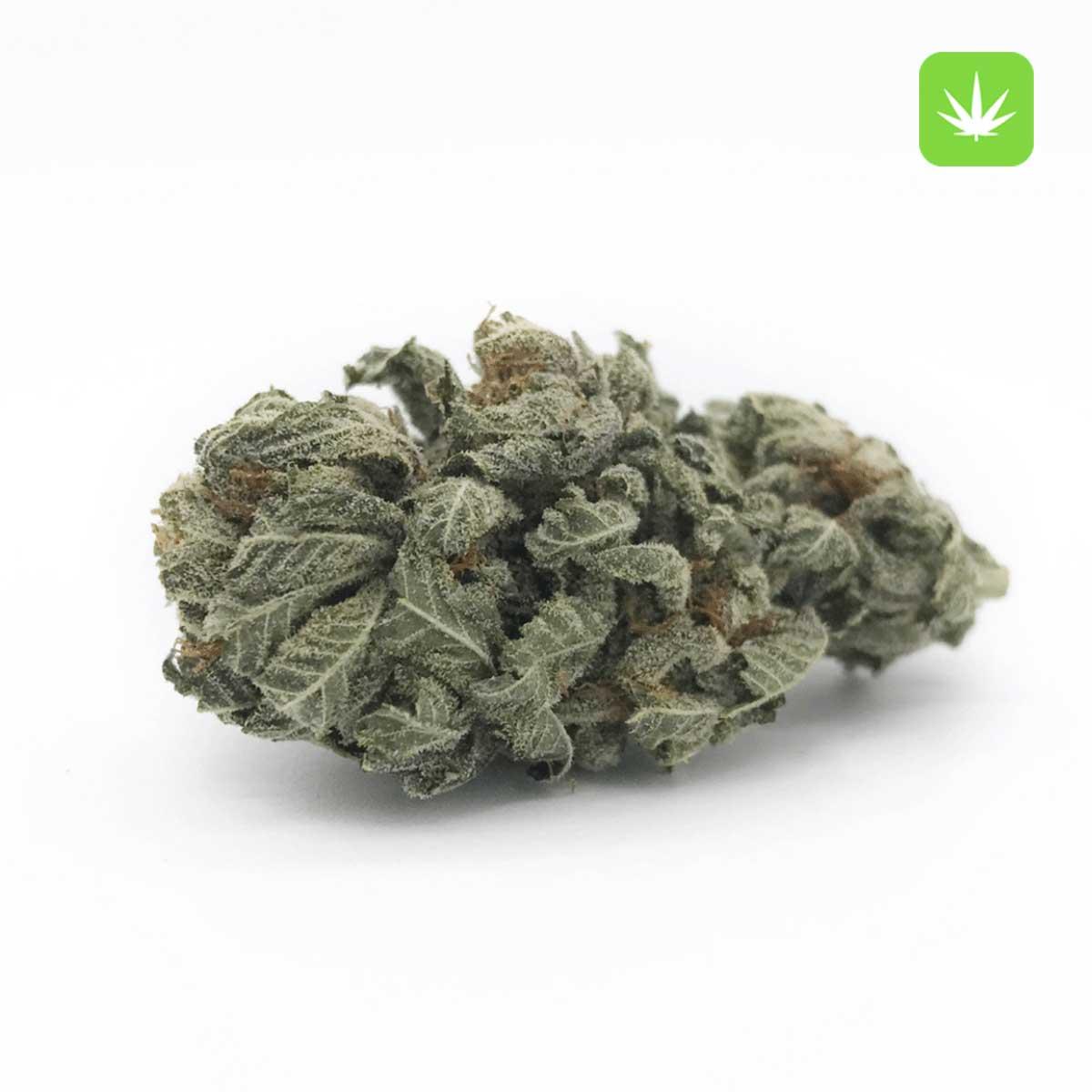 Afghan Kush 1 Cannabis Avenue 1 5