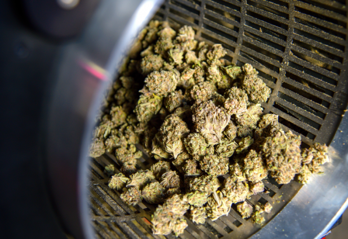 An evolution of cannabis processing