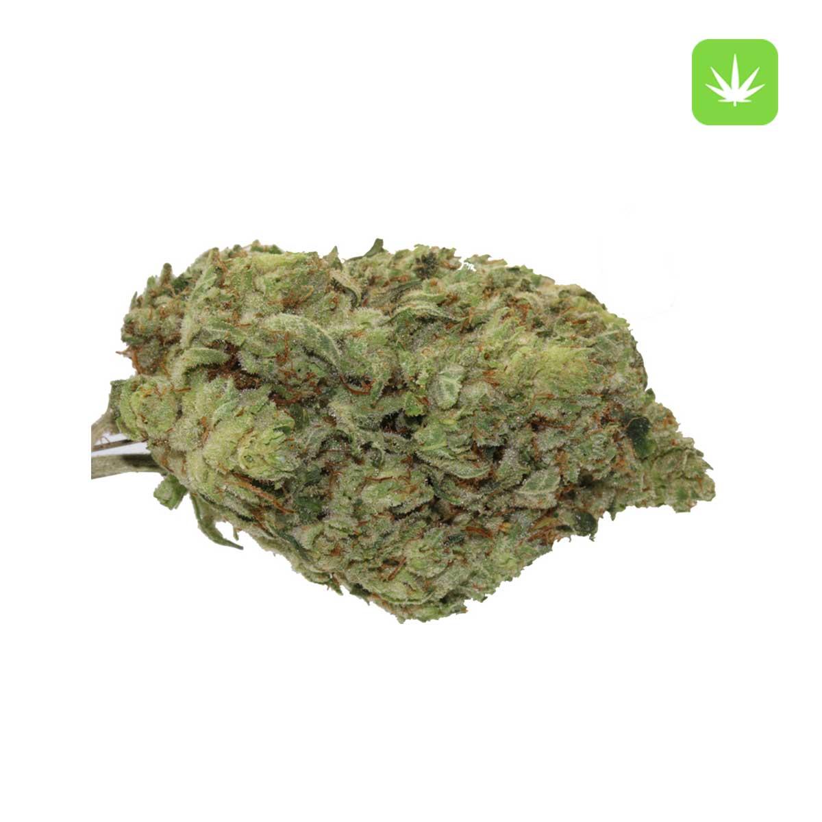Gorilla Glue Cannabis Avenue 1