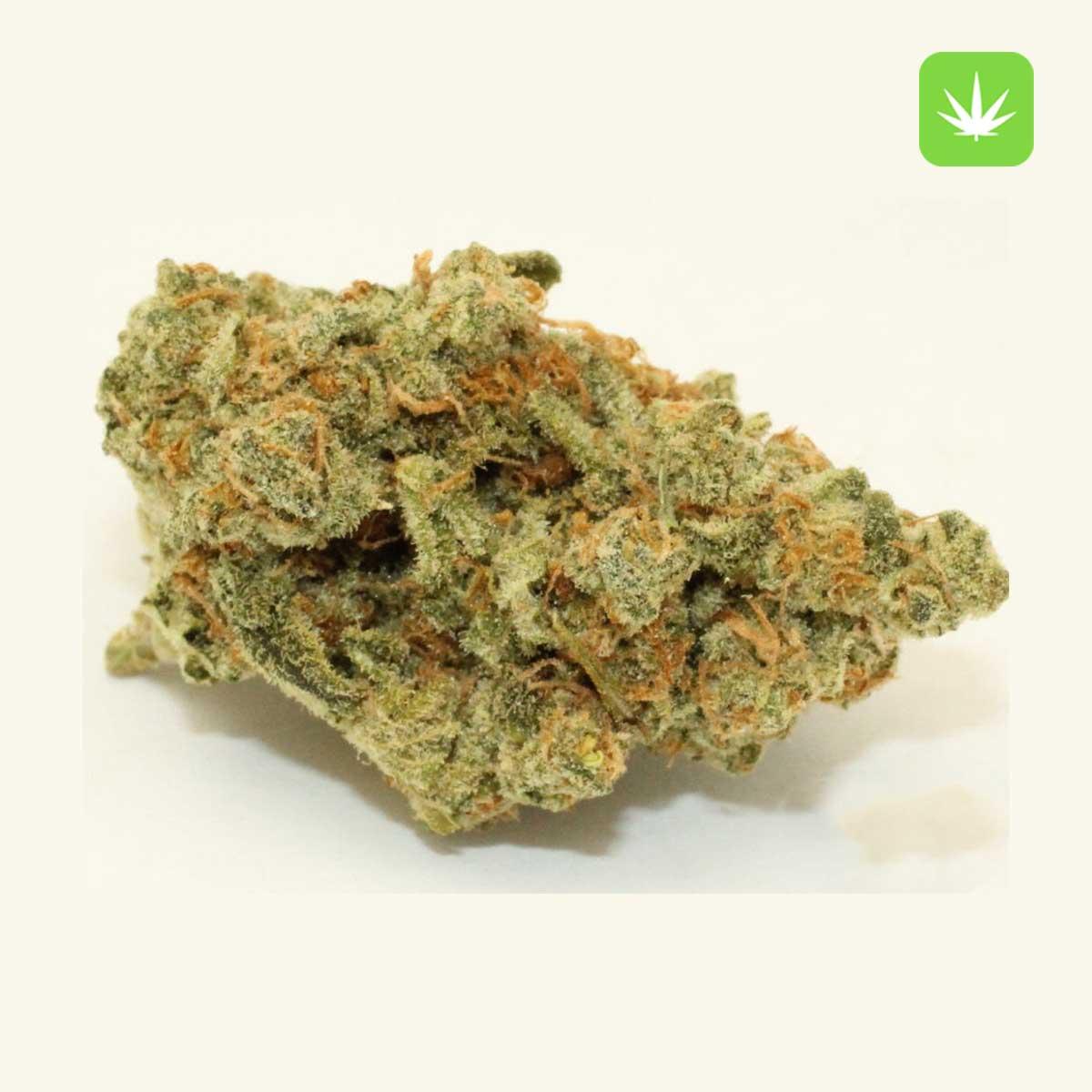 Hindu Kush 2 Cannabis Avenue 2