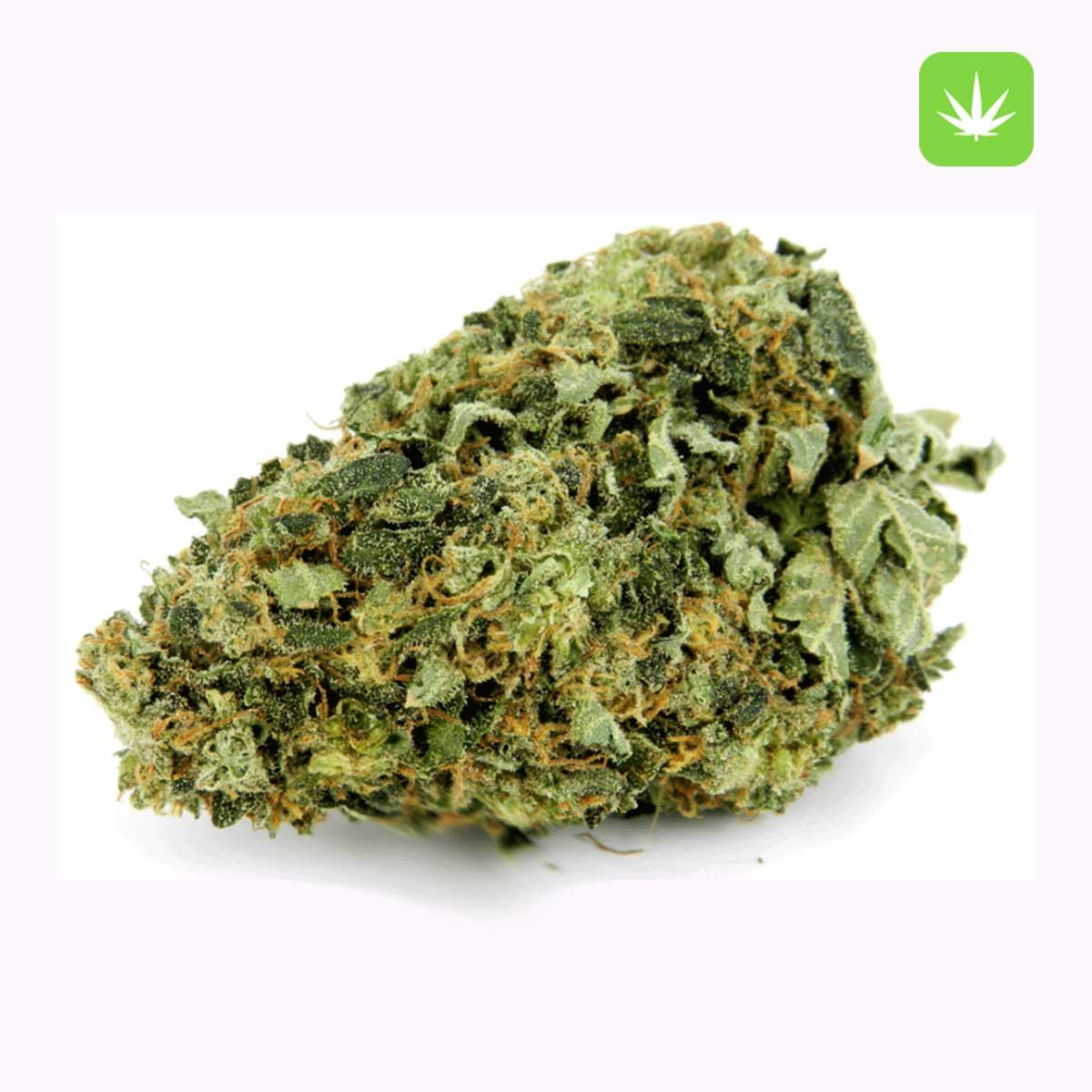Hindu Kush Cannabis Avenue 1