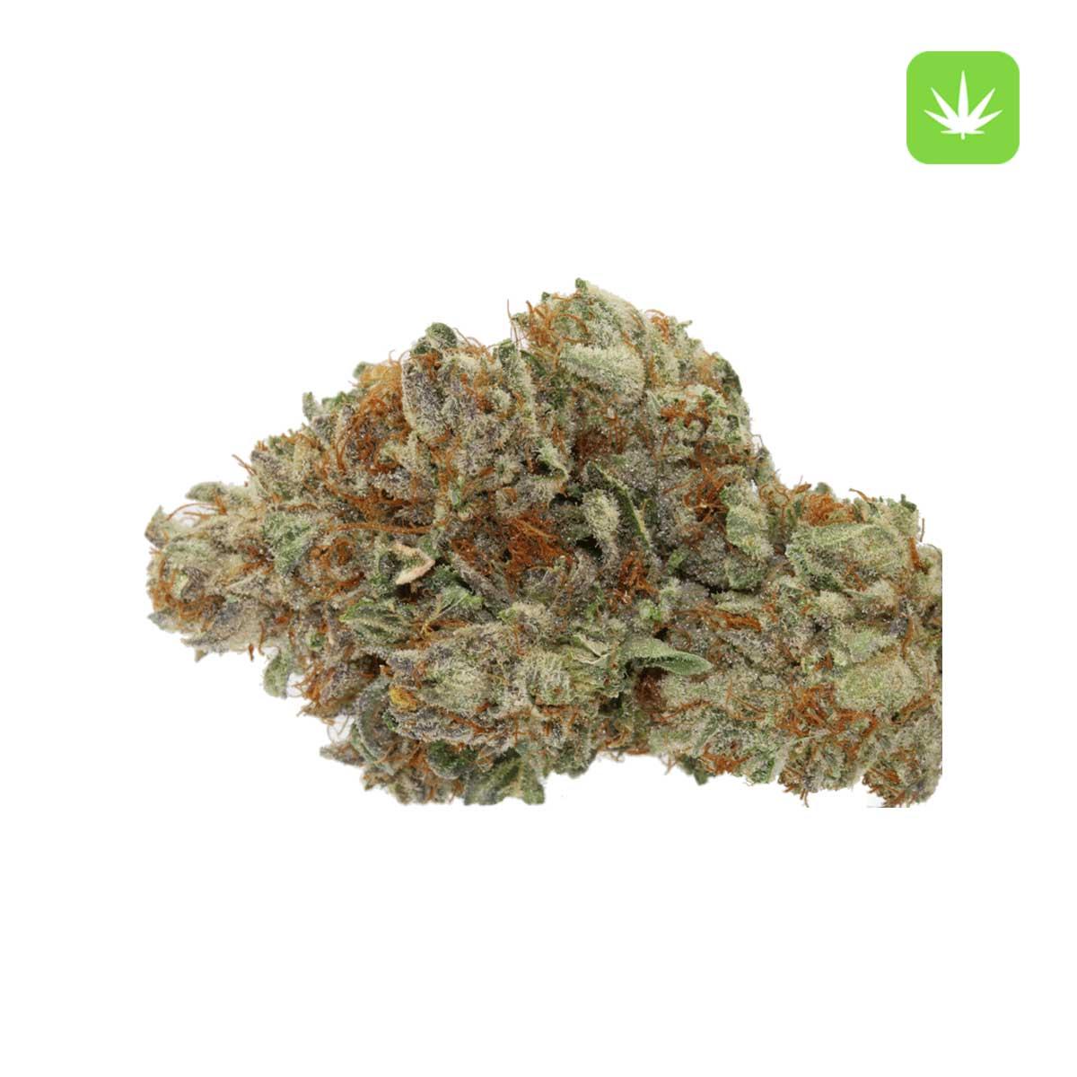 Kosher Kush 2 Cannabis Avenue 600x600 1 1