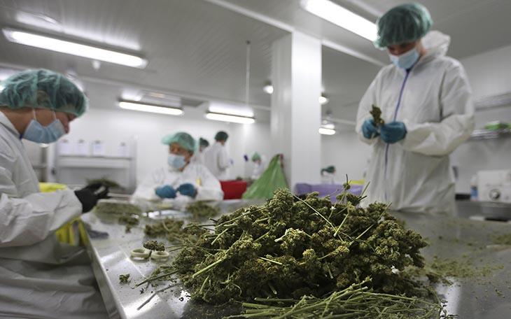 Marijuana PesticideTesting