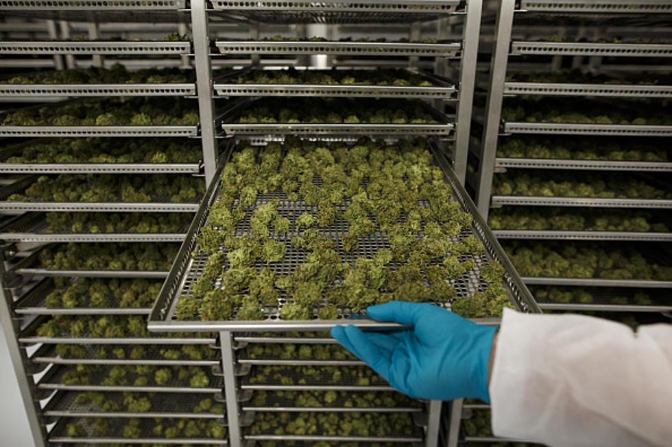 Marijuana Trays