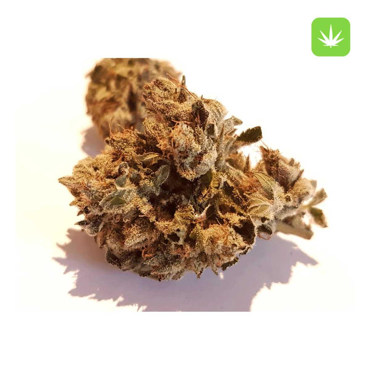 Pink Tuna Cannabis Avenue 1