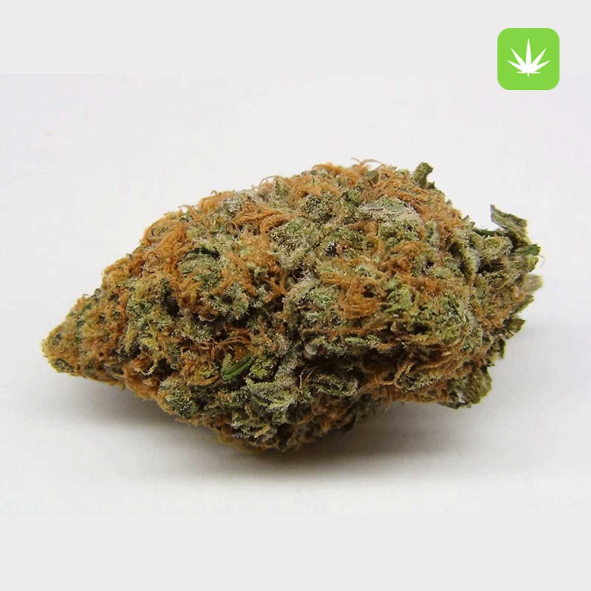 Purple Kush Cannabis Avenue 1