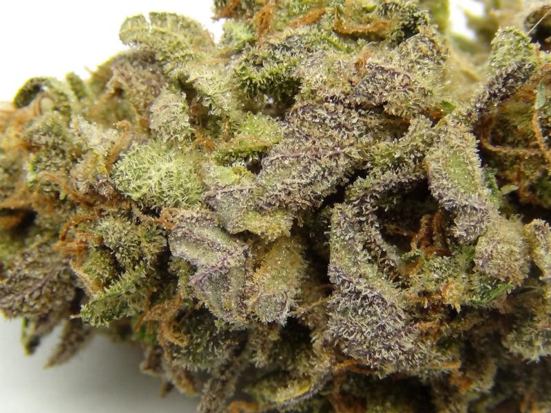 Purple Lemon Kush 2 1
