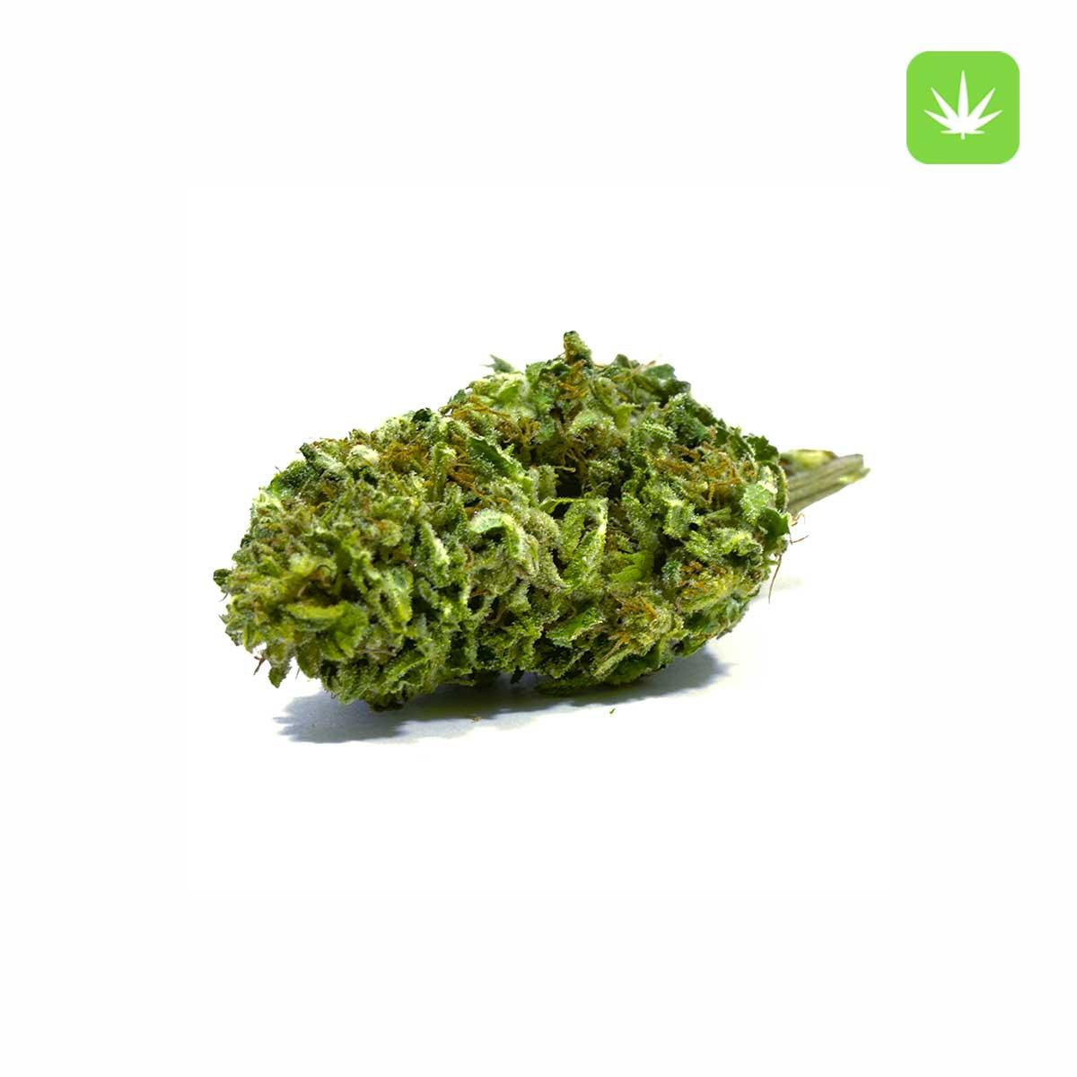 Sensi Star Cannabis Avenue