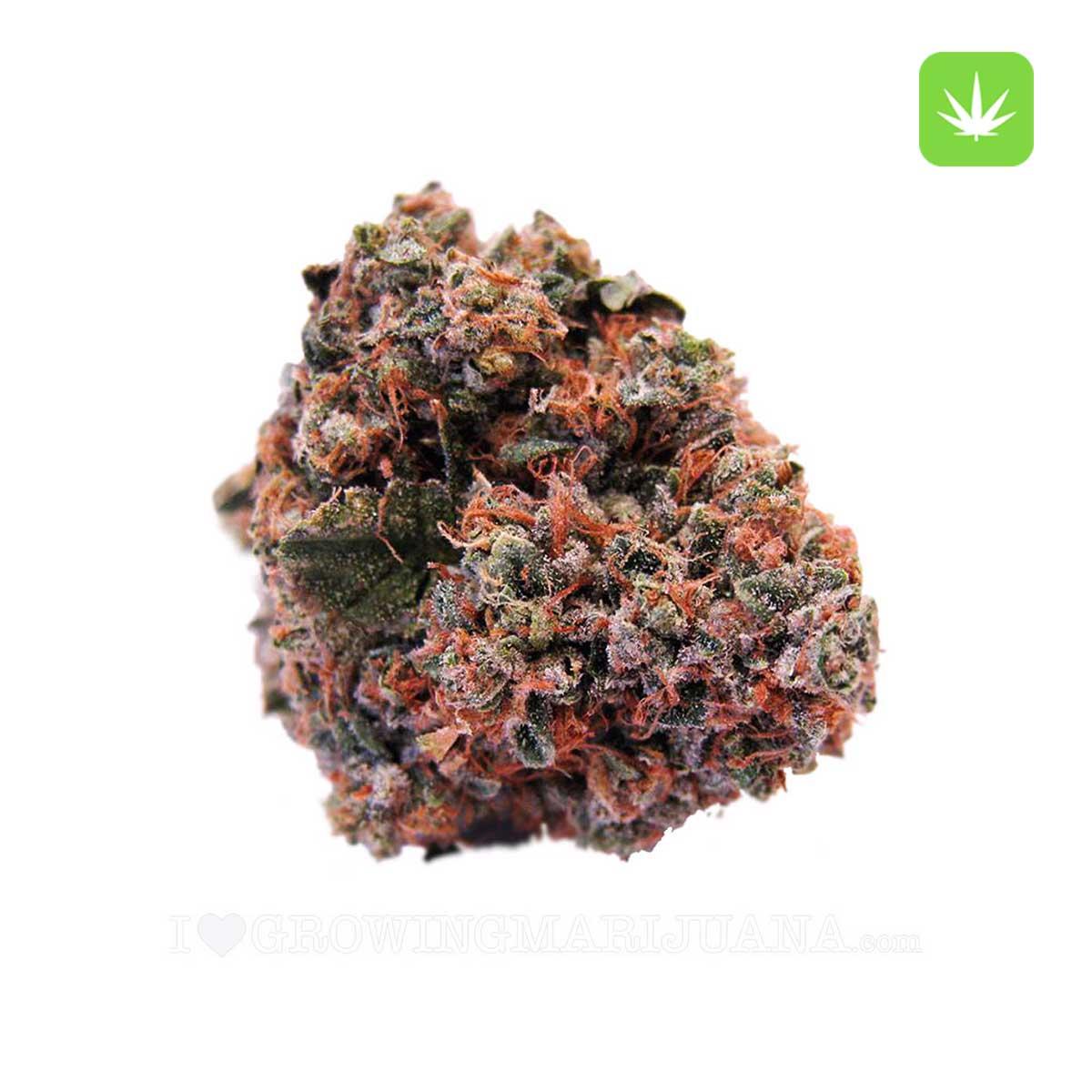 Strawberry Kush Cannabis Avenue