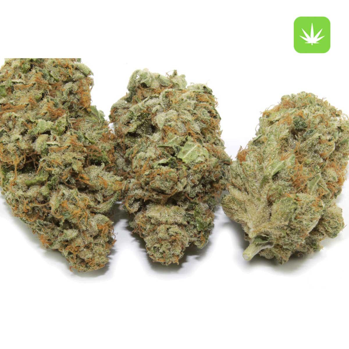 White Widow Cannabis Avenue 1
