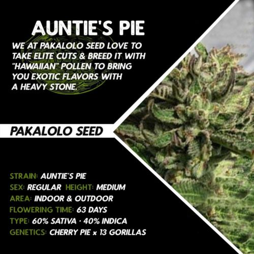 Buy Auntie's Pie cannabis seeds