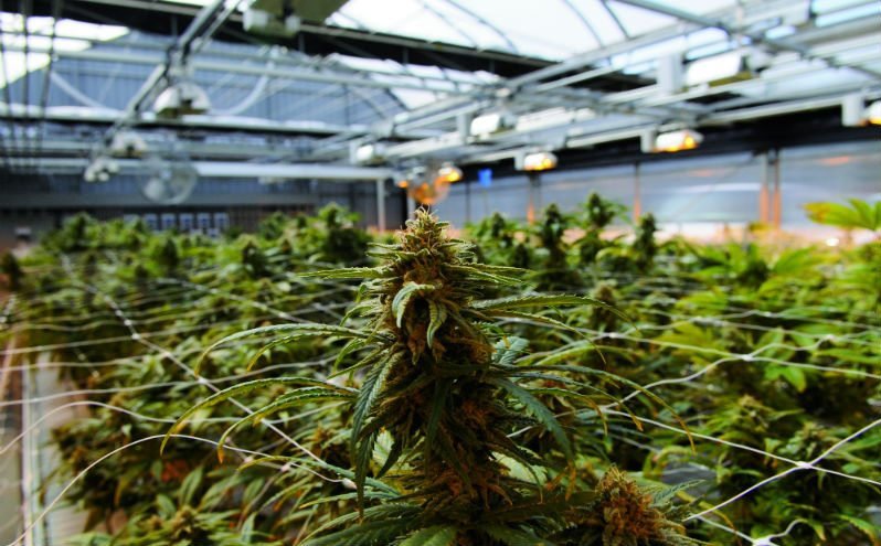 ggs greenhouse 2