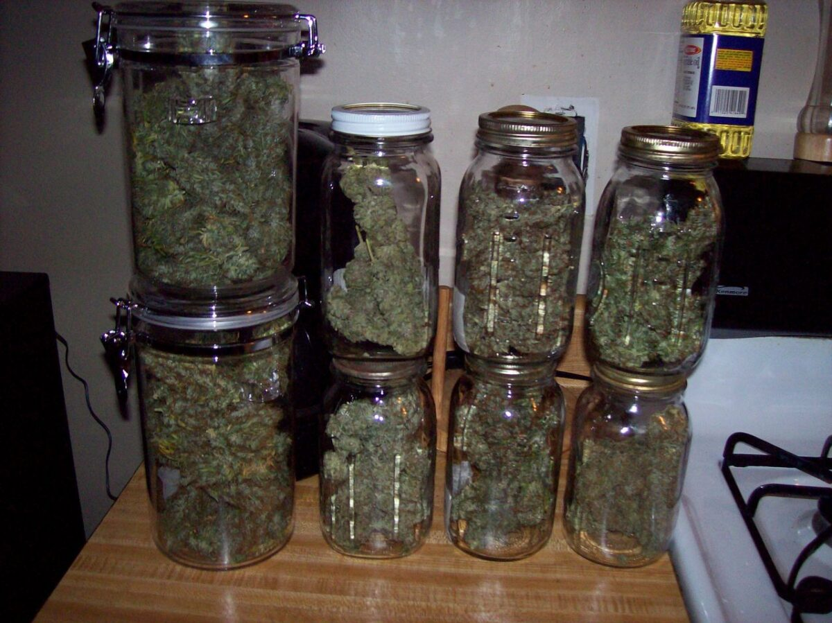 jars of cured marijuana the 420 shack scaled