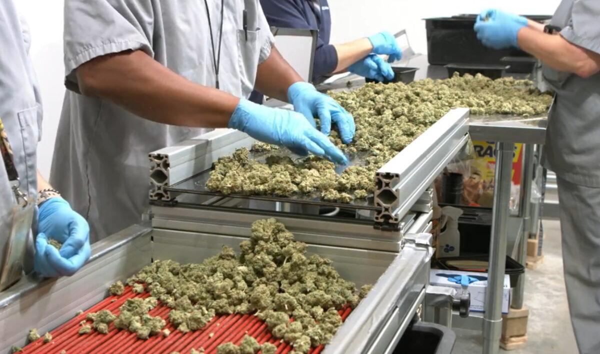 medical marijuana 3 scaled