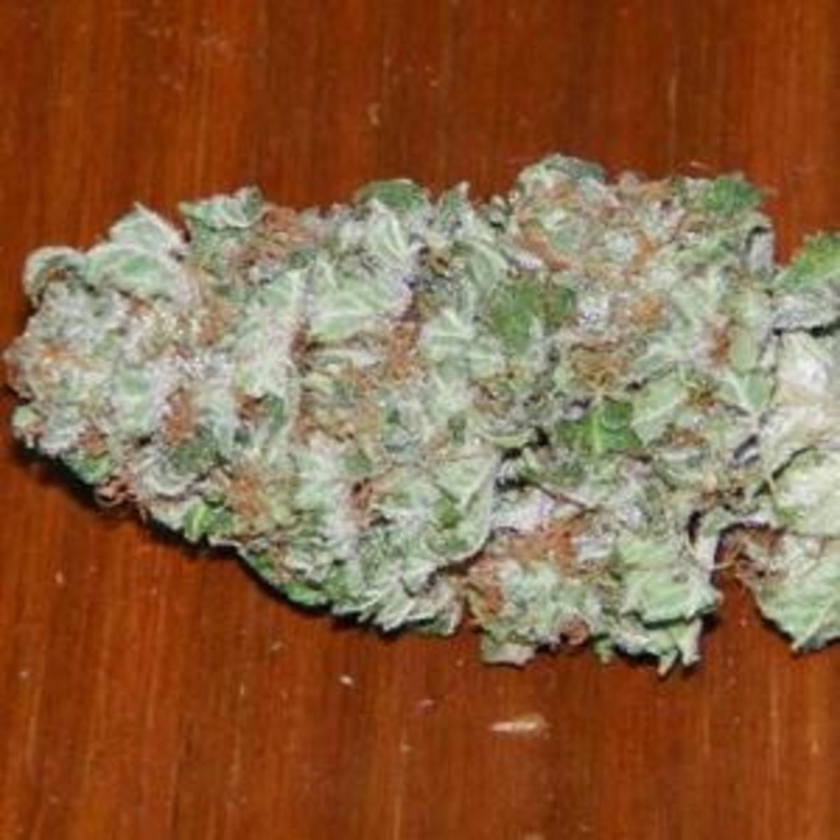pineapple kush marijuana strain