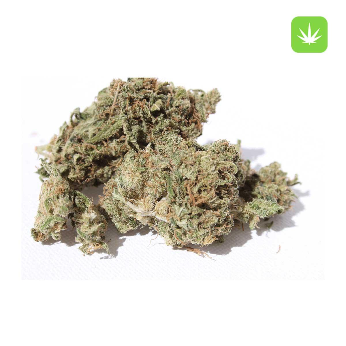 super silver haze Cannabis Avenue 1