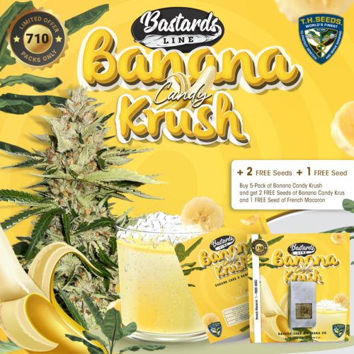 Buy Banana Candy Krush Feminized Cannabis Seeds