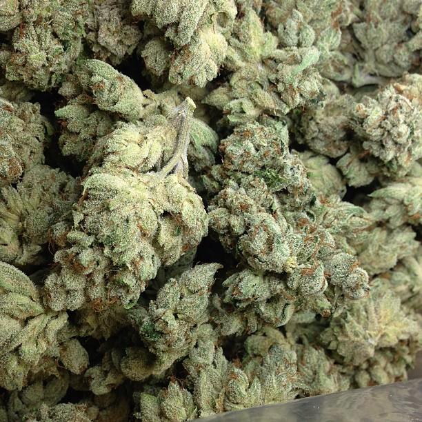 vsog weed vsog medical cannabis gw thcf 886